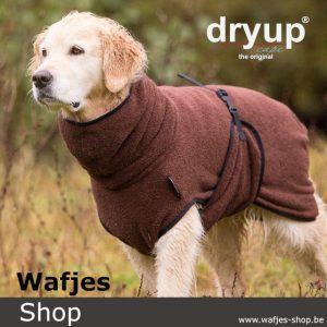 dryup Cape brown